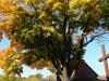 polenbaumkreuz