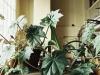 pflanzenregister